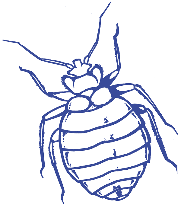 Drawing of BedBugs