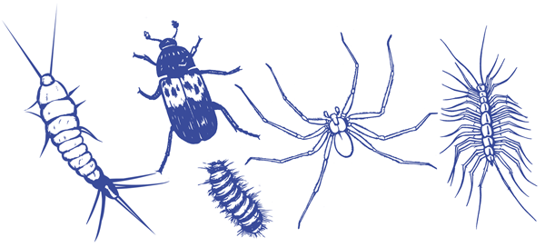 Drawing of indoor pests